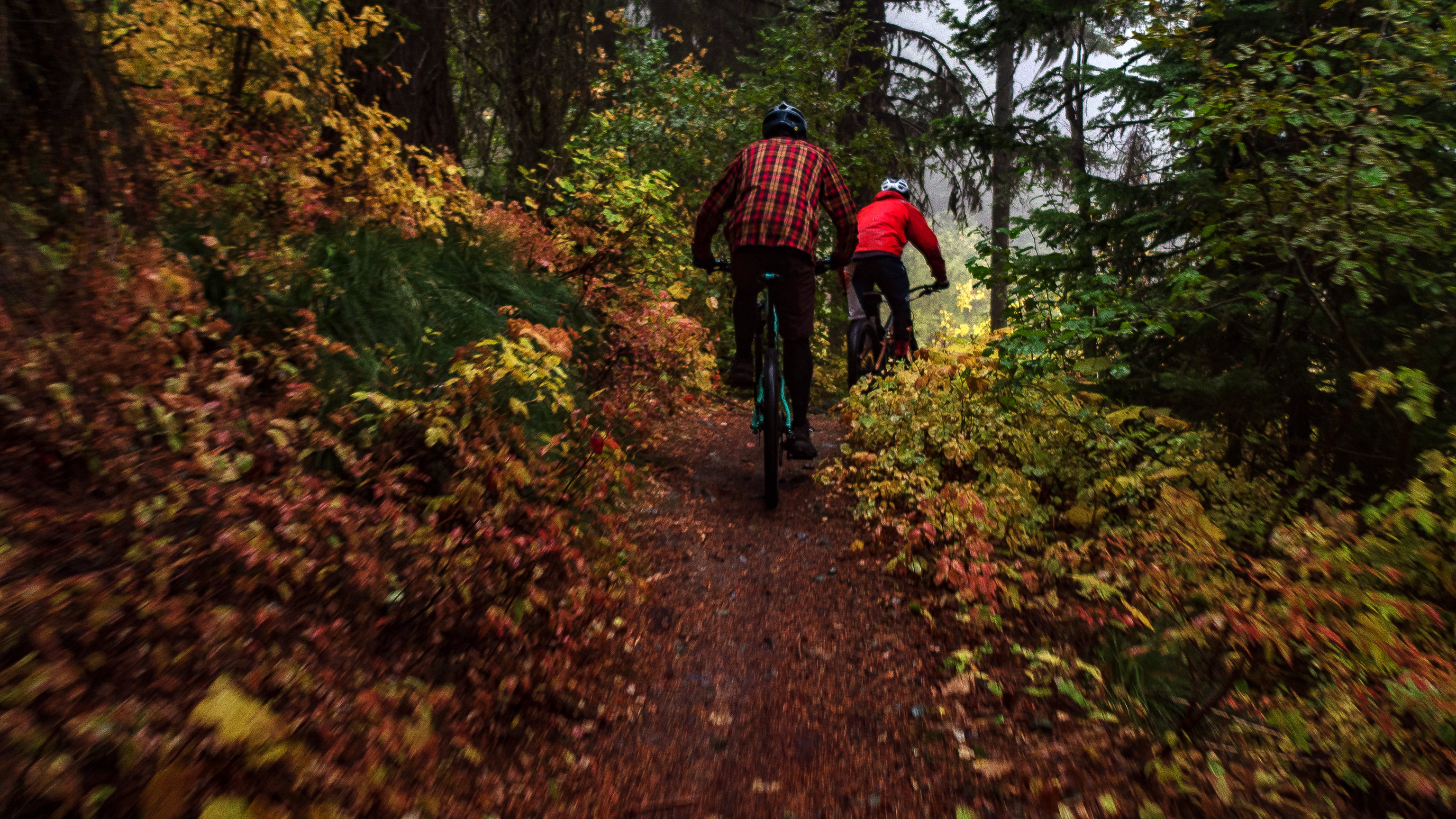 Two mountain  bikers in cool-weather clothing ride away from the camera on a single track forest trail, surrounded by fall-colored brush.