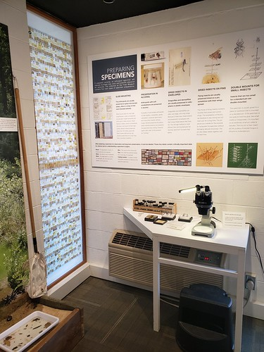 corner of public space, with a wall of microscope slides and desk with microscope