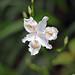 Qingcheng flowers
