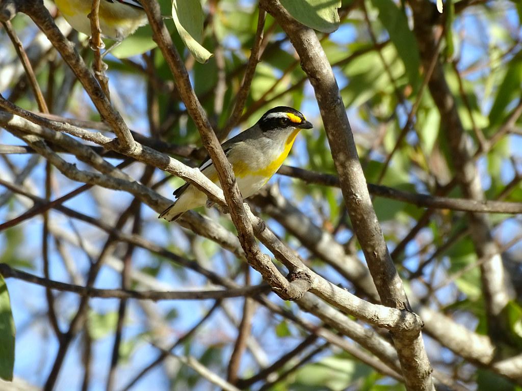 South Queensland '19