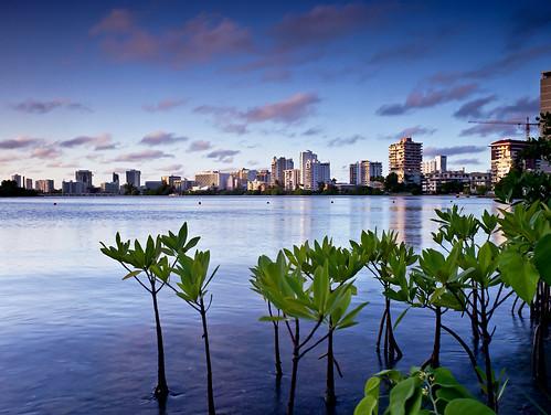 condadolagoon mangrove hotels sunset 645 mediumformat film bronicaetrsi zenzanon40mmmc fujipro160s