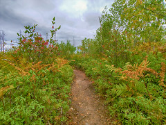 Purcell's Cove Backlands - McIntosh Run Singletrack Trails