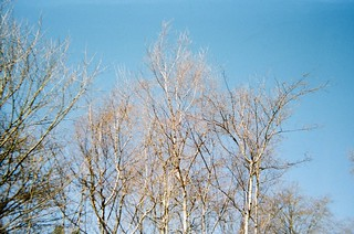 Winter tree branches in spring