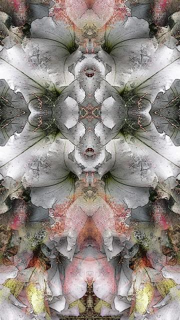 Fleur philosophale