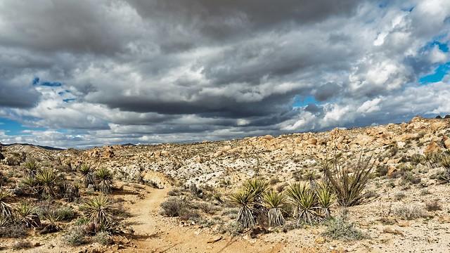 Joshua Tree National Park, Lost Palms Trail, View