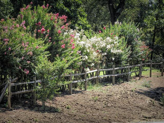 Last Summer Fence