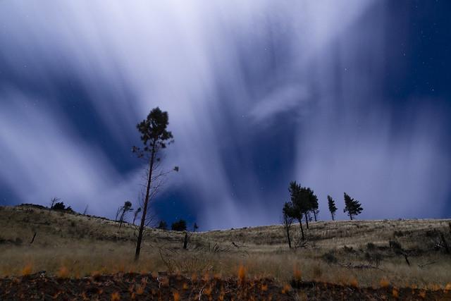 Nature near the Chimborazo volcano