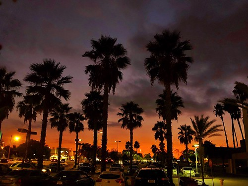 walking palmtrees utatatw700 california socal pasadena september summer sunset ©karolfranks karolfranksgmailcom karolfranks