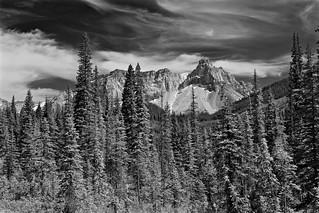 Forest & Mountains - Yoho NP - Monochrome