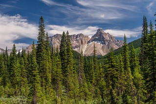 Forest & Mountains - Yoho NP - Color Version