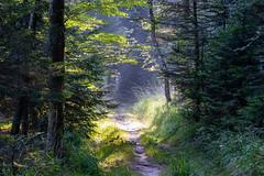 Piste en forêt