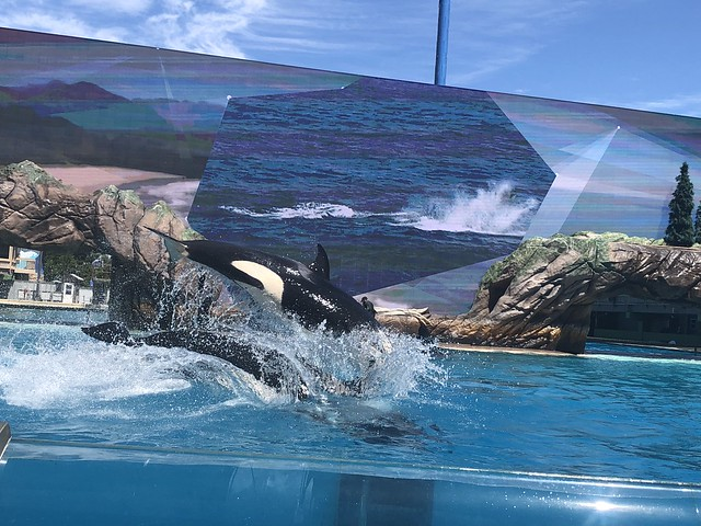 Sea World, San Diego, USA