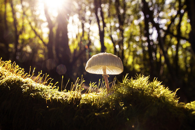 The Magical Mushroom