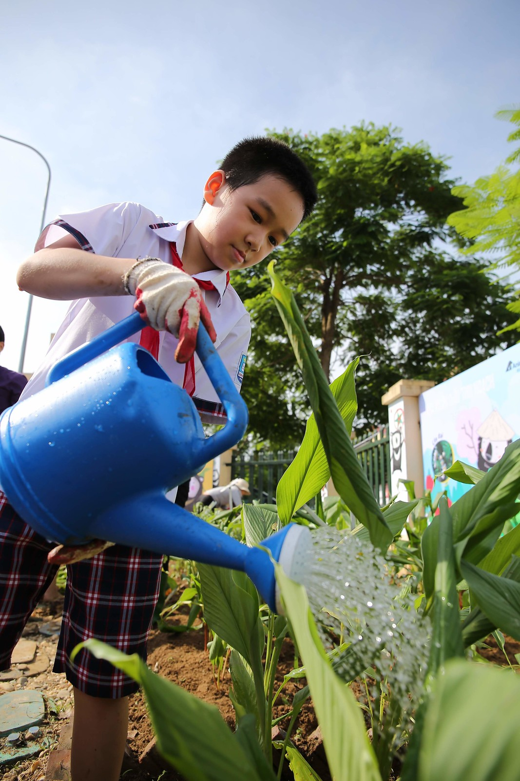 A student is watering plants