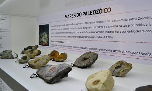 Coleção de Fósseis Firmino Jesus