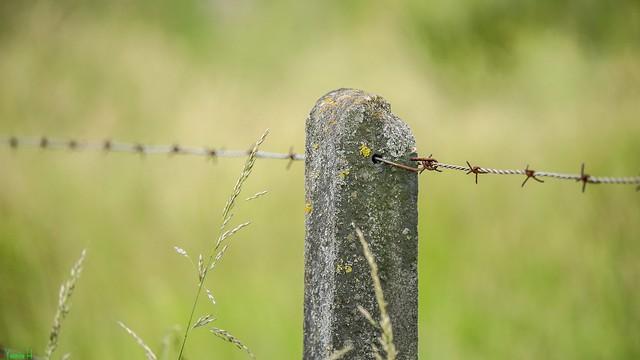 Fence - 7430