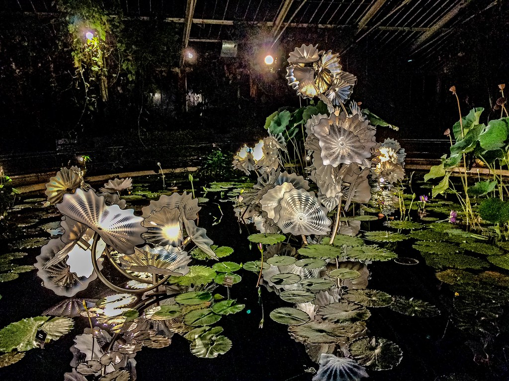 Dale Chihuly's Etheral White Persian Pond Too hot & steamy for the DSLR in the Waterlilly house.