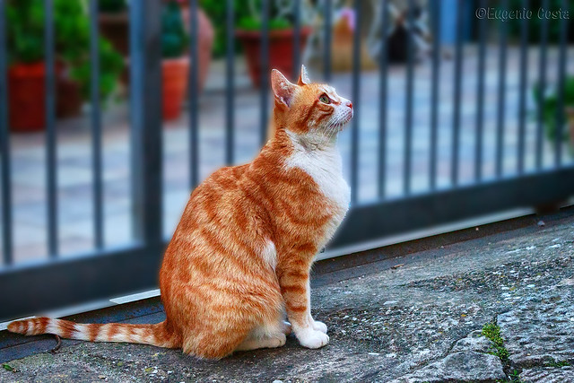 Silvestro - gatto di strada 2 / Sylvester - street cat 2
