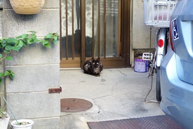 Today's Cat@2019-09-20