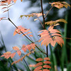 autumn almost here i - iii by summer071957