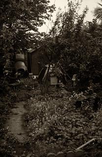 Caffenol Garden