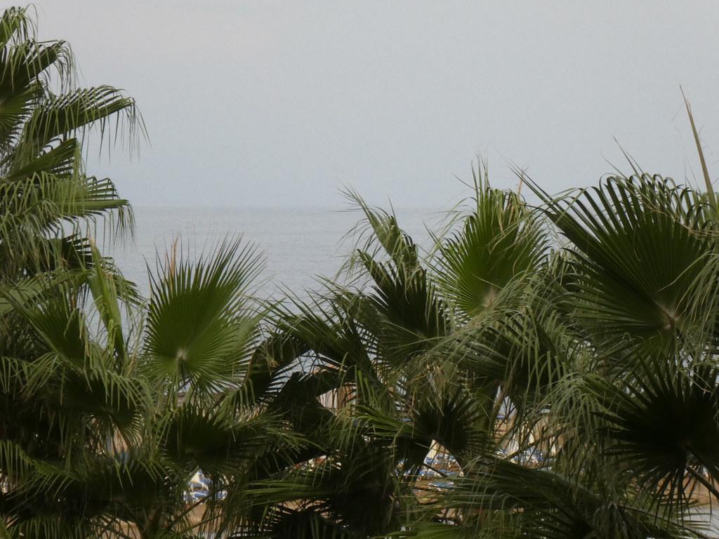 Море и пальмы