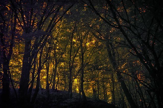 In the IR woods