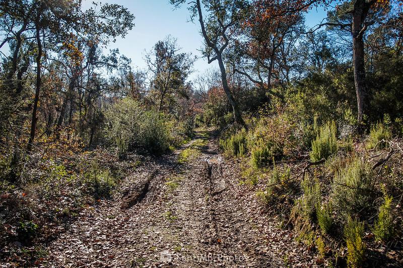 Camino por la Roureda de Tordera