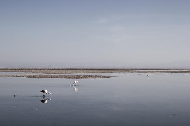 Laguna Chaxas, Chile