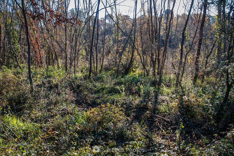 Vegetación de ribera en el camino a la Roureda de Tordera