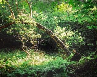 Forest Scene along Limberlost Trail