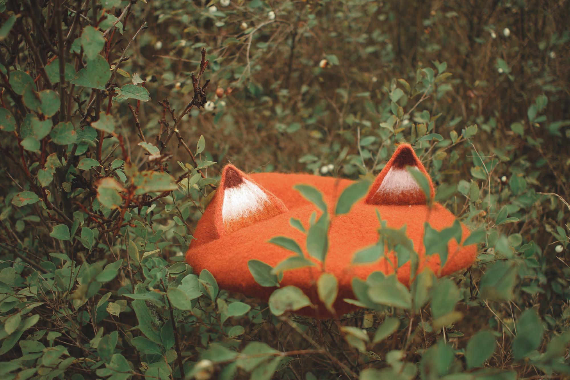 fox-24