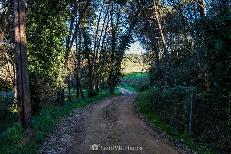 Camino cerca de Ca l'Argenter