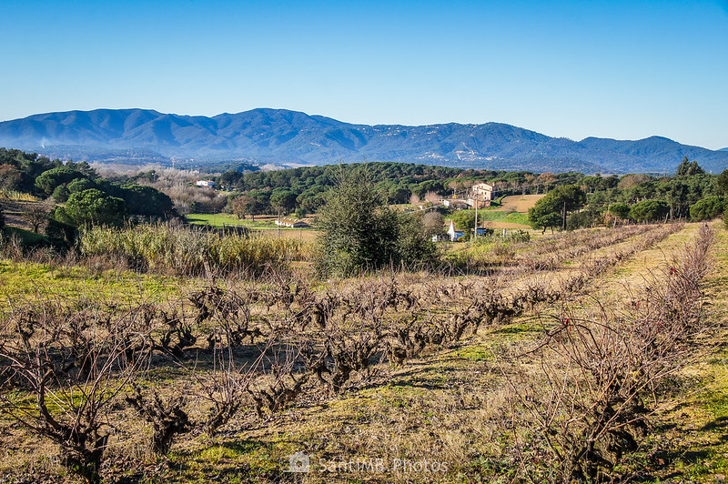 Viñedos de Tordera y el macizo del Montnegre