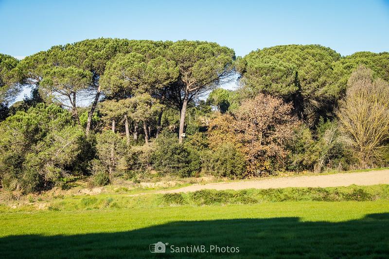 Bosque próximo a Can Raba