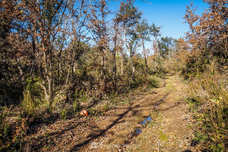 Restos de la tala ilegal de abril del 2018 en la Roureda de Tordera