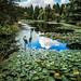 Zen Garden with Lotus Pond- Vandusen Botanical Garden in Vancouver BC Canada