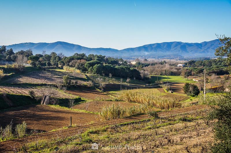 Viñedos y campos de cultivo del norte de Tordera