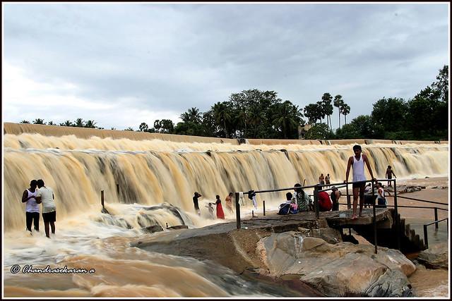 9197 - Kodiveri Dam on the River Bhavani
