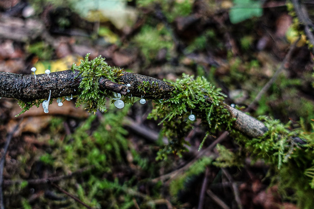 Tender mushrooms