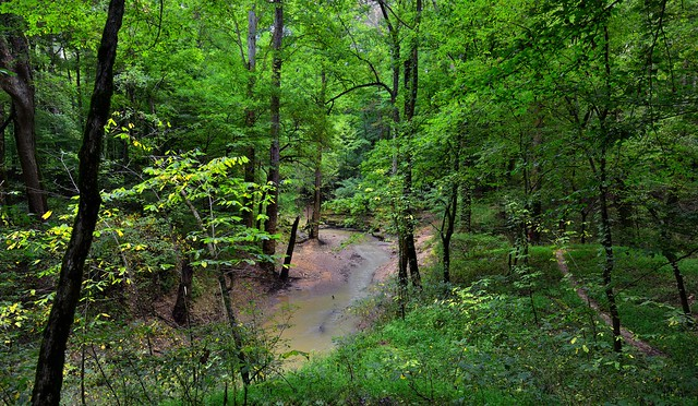 Waters Flowing Through the Forest of Mammoth Cave National Park
