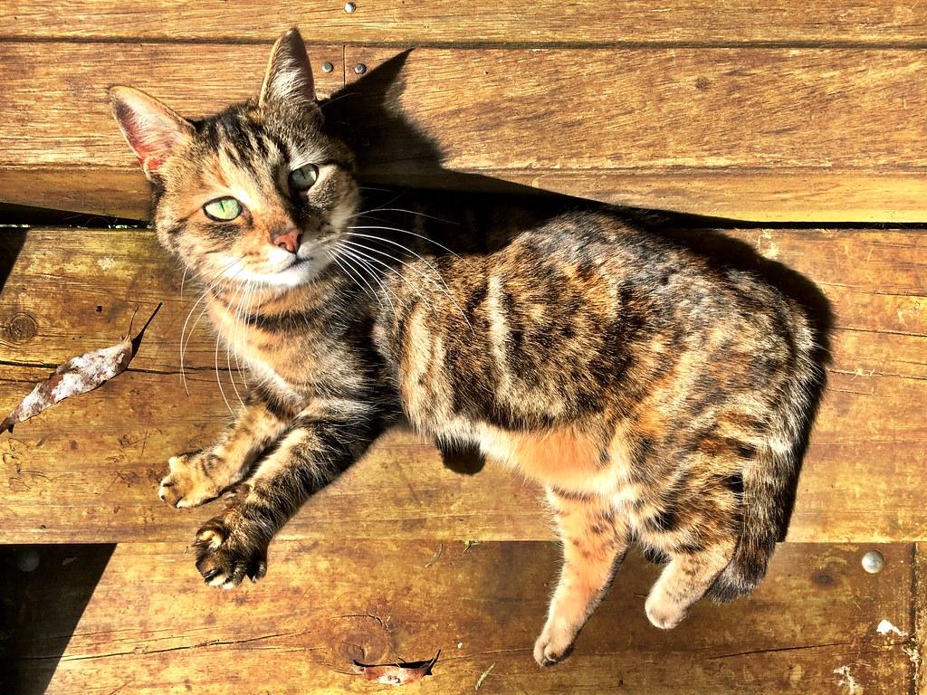 Samba. Former wild kitten from Loch.