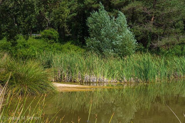 La charca. The pond