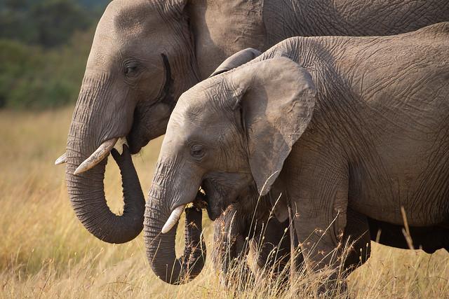 Elephants b 29th July 19 1DX edit2 (1 of 1)