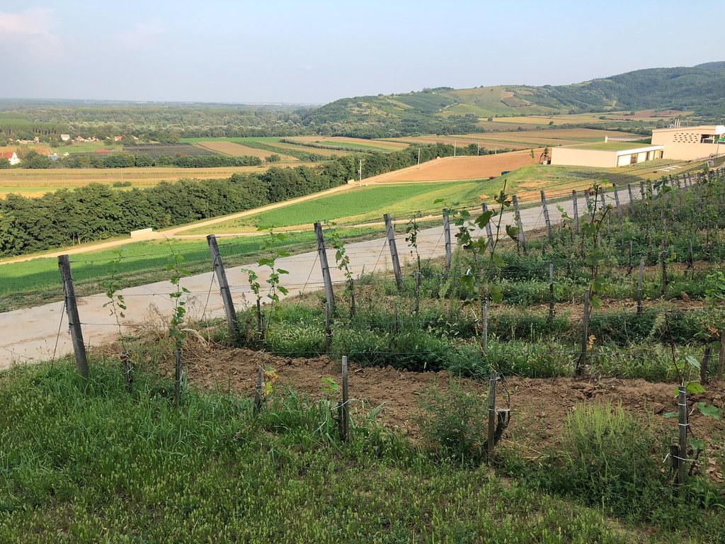 Viinitilamajoitus Unkarissa-23