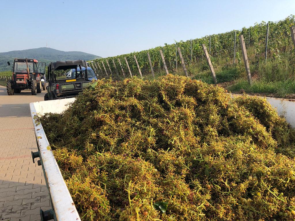 Viinitilamajoitus Unkarissa-21