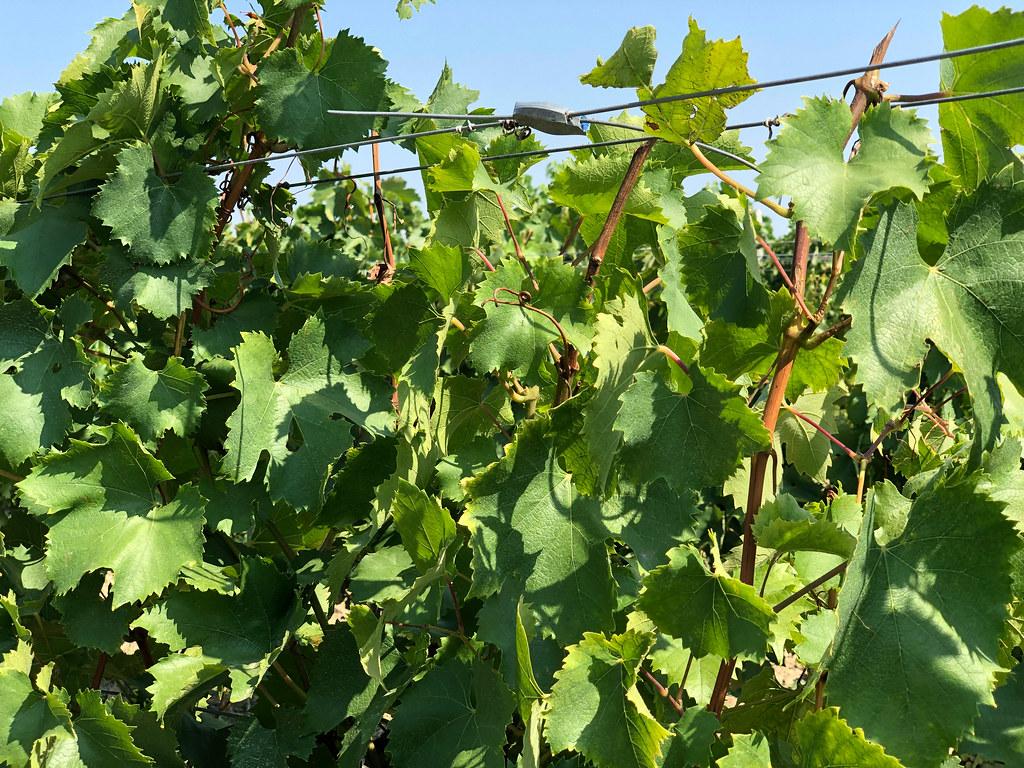 Viinitilamajoitus Unkarissa-5