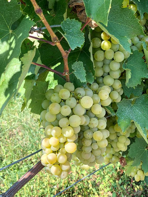 Viinitilamajoitus Unkarissa-3