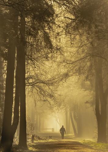 england unitedkingdom whitegate fog sunrise mist walking path