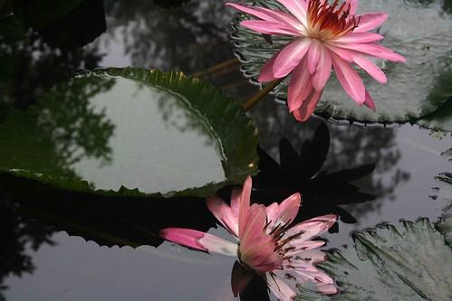 City Hangout - Lily Pond, Lodhi Gardens